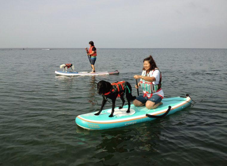 愛犬とタンデムSUP